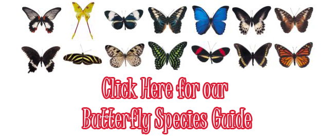 Butterfly Species Guide