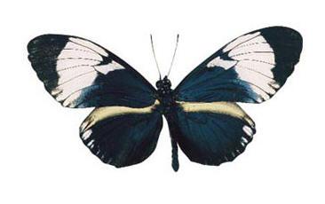 Black White Helicon
